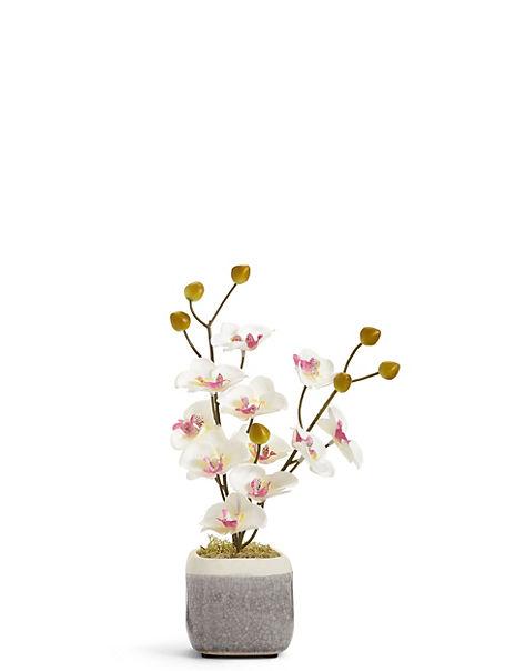 Mini Orchid in Crackle Pot