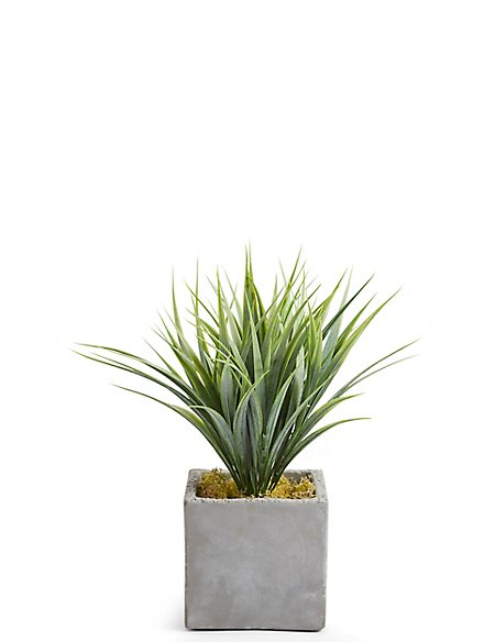 Grass Plant in Slate Pot