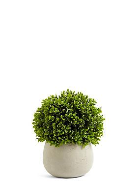 Topiary in Ceramic Pot