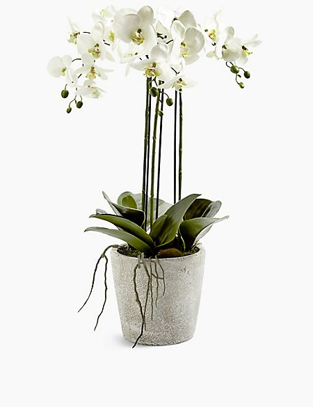 Large Orchid in Ceramic Pot