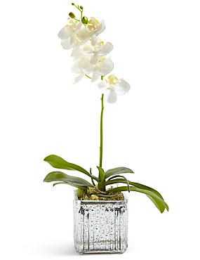 Orchid in Mercury Cube