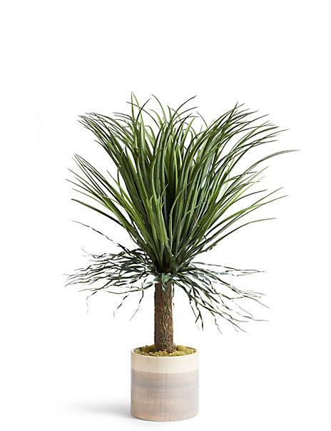 Aloe Tree Pot