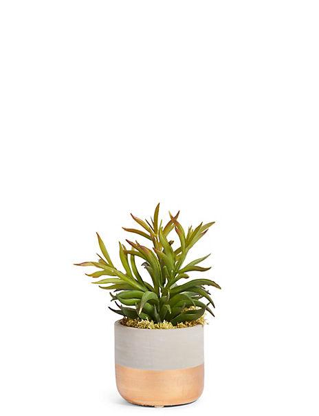 Succulent in Metallic Pot