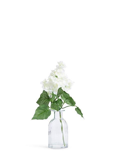 White Hydrangea in Small Jar