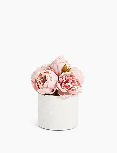 Ceramic Pot Peony Bundle