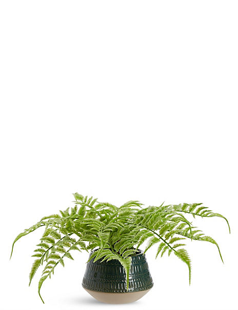 Fern in Ceramic Taper Pot