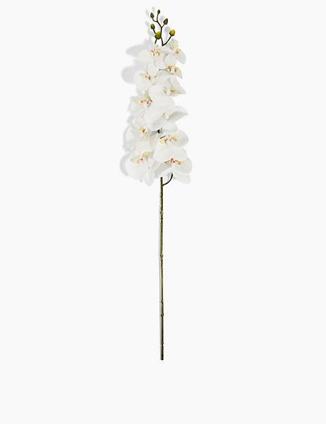 Large Single Stem Orchid