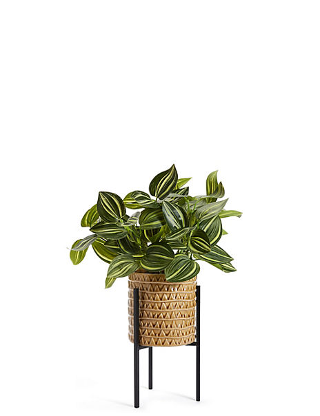 Tradescantia in Textured Pot with Stand