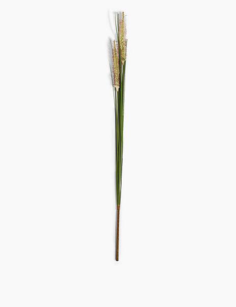 Single Stem Foxtail Grass