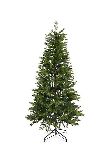 6Ft Fraser Fir Tree