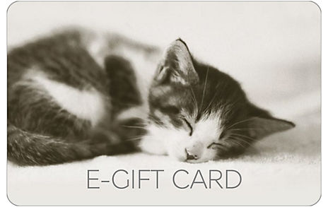 Cute Kitten E-Gift Card