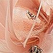 Petit bibi orné de plumes, ROSE DISCRET, swatch