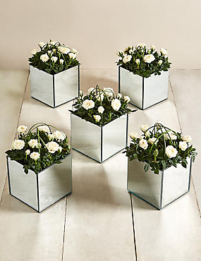 5 Pure Rose Mirrored Cubes