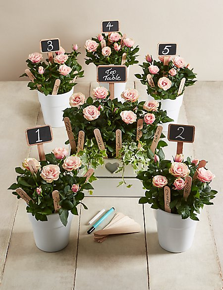 Celebration Table Plan - Pale Pink