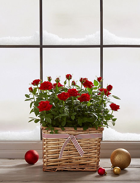 Traditional Red Rose Basket
