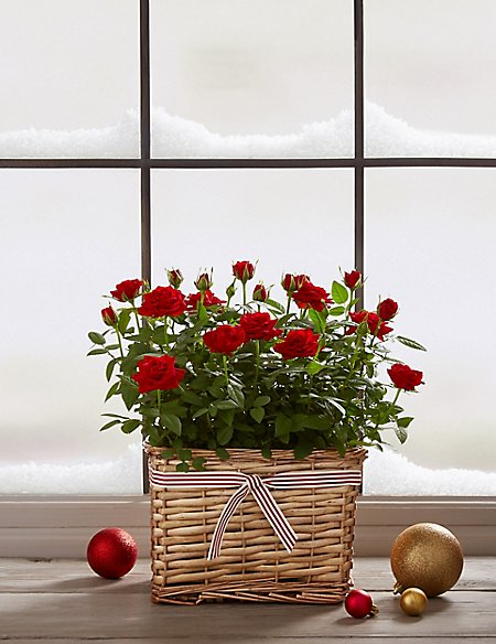 Christmas Contemporary Basket