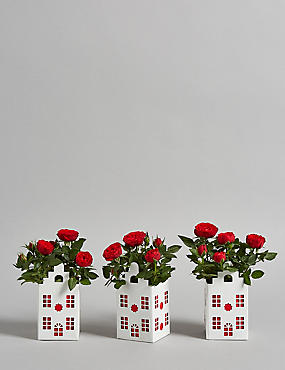 Red Rose Mini House Trio