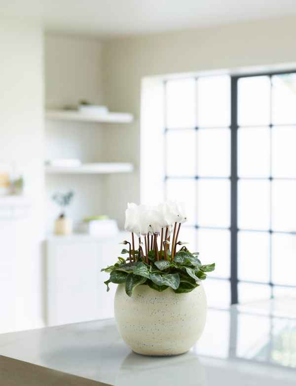 Indoor Plants | House Plants For Next Day Delivery | M&S on house with trees and flowers, house plant with fragrant white flowers, popular house plants with flowers, house plant identification, house plant pink splash, perennial daisy plant with purple flowers, house plants that flower, invasive plant with tall orange flowers, growing wax flowers, house plant with waxy flowers, common house flowers, patience yellow flowers, house plant with lily, house plants for dark areas, house plant with color, house plant with small white flowers, house plant with vines, edible plants with flowers, house plant purple heart, bromeliad plant flowers,