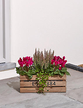 Cyclamen Crate Garden Planter