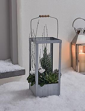 Doorstep Lantern Planter