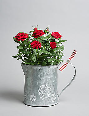 Sparkling Christmas Red Rose Jug