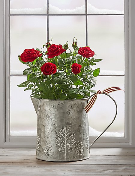 Sparkling Christmas Red Rose Jug