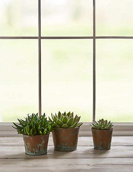 Succulent Plant Trio