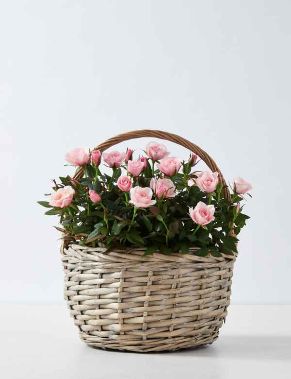 Mother S Day Flower Bouquet Free Delivery M S
