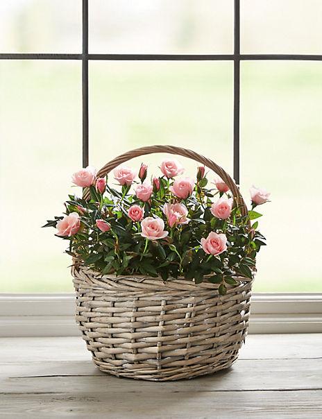 Scented Rose & Lavender Tin