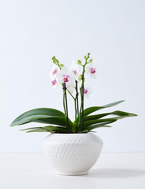 Miniature Orchid Planter