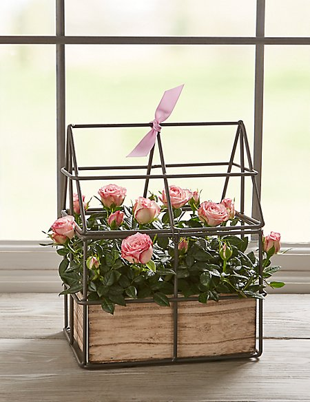 Pink Rose Wire House Planter