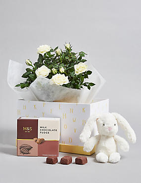 White Rose Plant, Box of Chocolates & Plush Toy Hamper