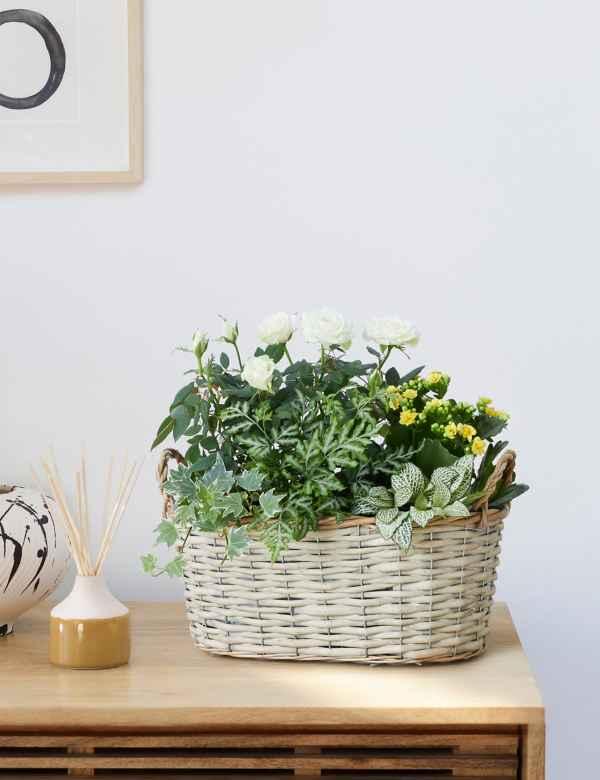House Potted Garden Plants Hanging Basket Plants Ms