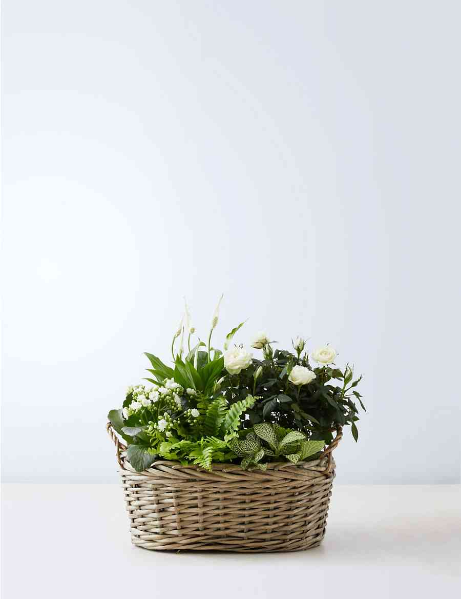 Large Spring Flowering Basket Ms