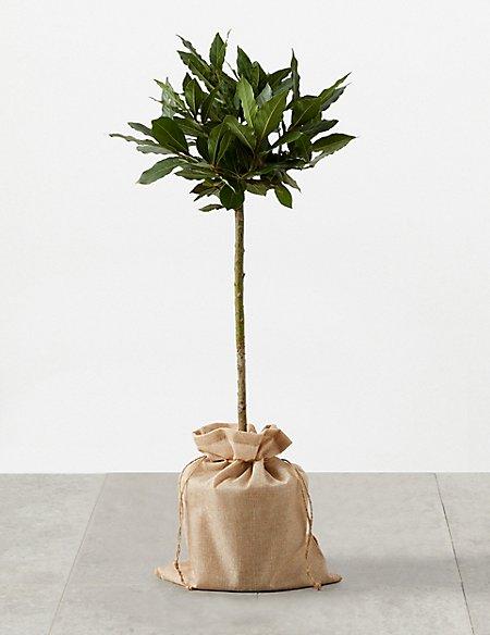 Garden Bay Tree