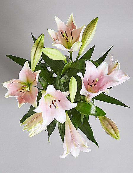 The Collection Cali Lily Bouquet