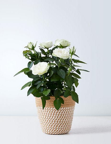 Yellow Rose Gift Bag