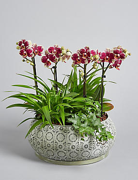 The Collection Botanical Orchid Planter