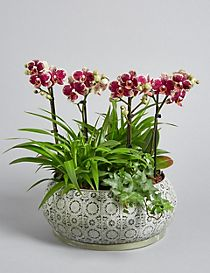 Collection Botanical Orchid Planter