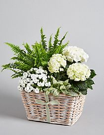 Contemporary White Flower Basket