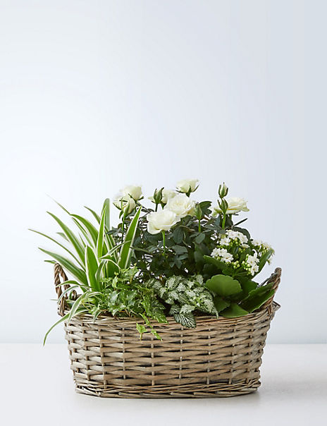 Large Summer Flowering Basket