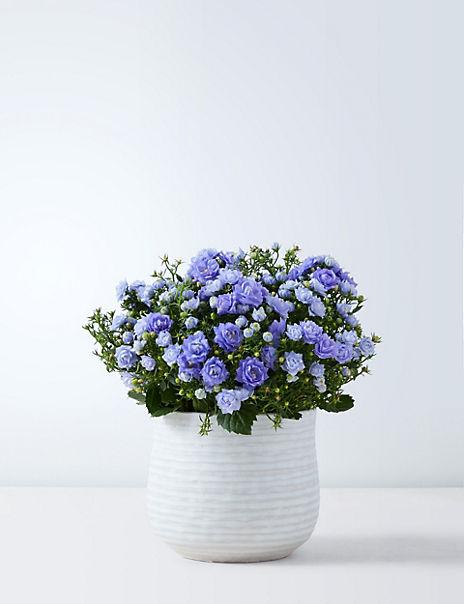 Flowering Campanula Jug