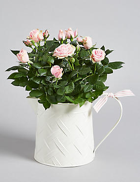 Summer Rose Jug