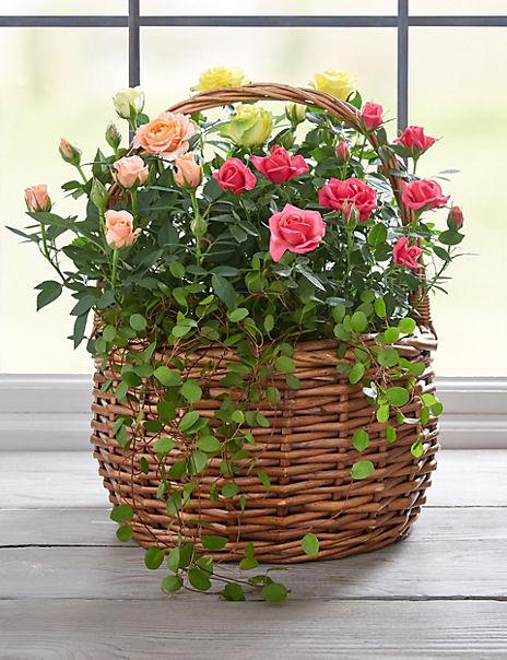 Pink & Cream Rose Basket
