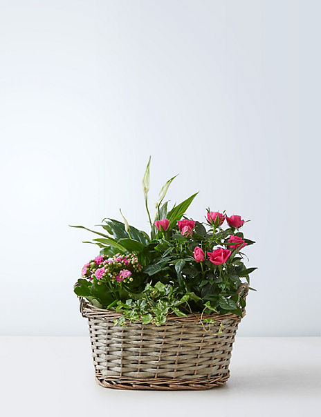 Summer Flowering Basket