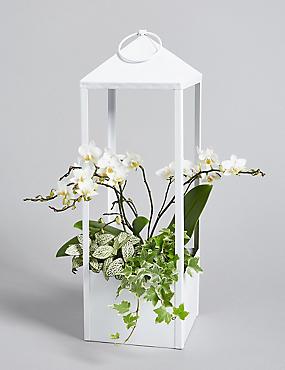 Orchid Lantern Planter