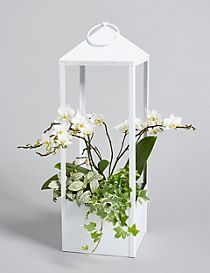 Collection Orchid Lantern Planter