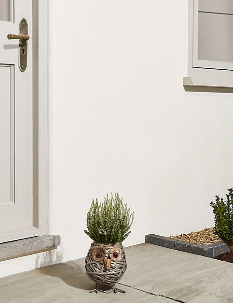 Novelty Owl Calluna Planter