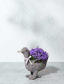 Daisy Duck Campanula Flower Planter