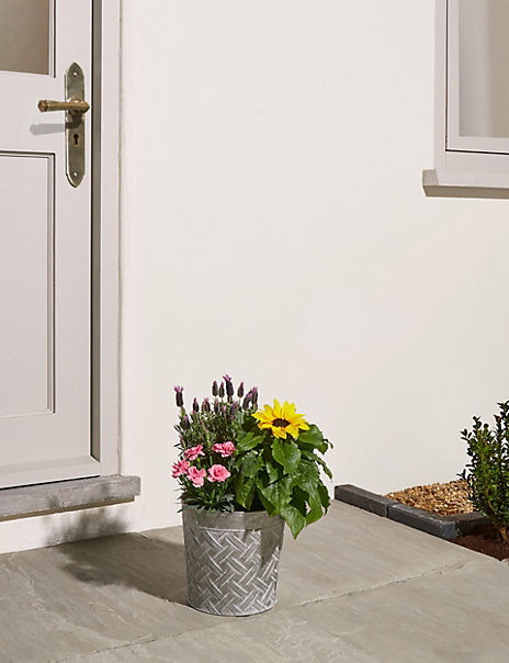 Bee Friendly Patio Planter